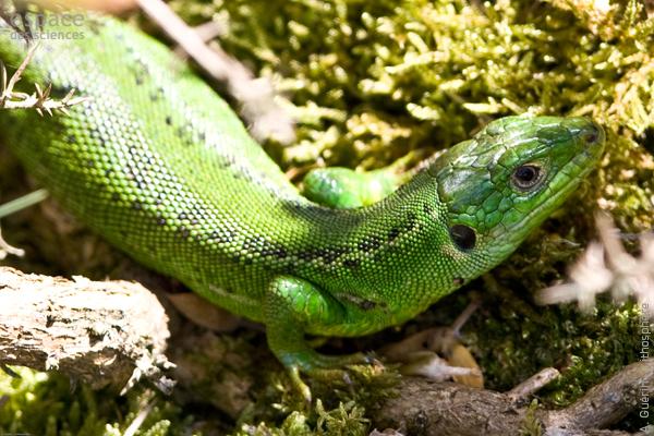 reptile amoureux site de rencontre